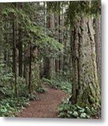 Heritage Forest Metal Print