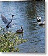 Heron And Pelicans Metal Print