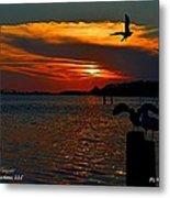 Heron And Seagull Sunset I Mlo Metal Print