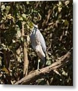 Heron At Katherine Gorge Metal Print