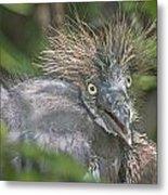 Heron Chick Metal Print