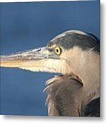 Heron Close-up Metal Print