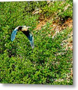Heron Flies Over Oak Creek In Red Rock State Park Sedona Arizona Metal Print