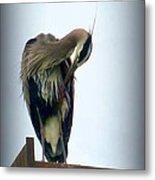 Heron Grooming Metal Print