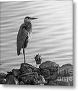 Heron In Black And White Metal Print