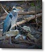 Heron King Metal Print