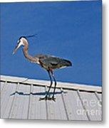 Heron On Rooftop Metal Print