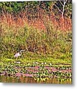 Heron On Shore Of Rapti River In Chitwan Np-nepal  Metal Print