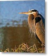 Heron On The Lake Metal Print