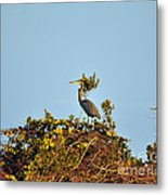Heron Perch Metal Print
