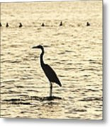Heron Standing In Water Metal Print