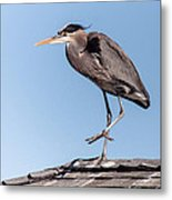 Heron Up On The Roof Metal Print