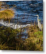 Heron Watchful Eye Metal Print