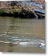 Heron With Ducks Metal Print