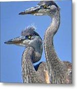 Herons On The Lookout Metal Print