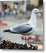 Herring Gull At The Harbour Metal Print