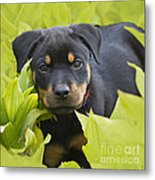 Hey Here I Am Metal Print by Heiko Koehrer-Wagner