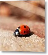 Hey There Little Lady Bug Metal Print
