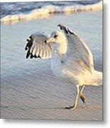 Hey Wait - Sea Gull Metal Print