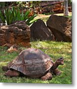 Hey - What About Me Metal Print