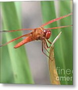 Hi Dragon Fly Metal Print