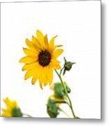 Hi Key Sunflower Metal Print