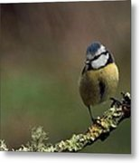 Hi There Metal Print by Peter Skelton