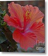 Hibiscus 1 Metal Print