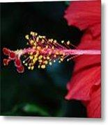 Hibiscus 3 Metal Print