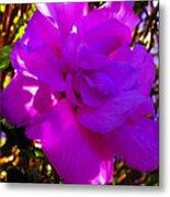 Hibiscus 4 Metal Print