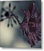 Hibiscus Acetosella Metal Print
