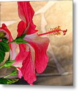 Hibiscus Along The Walk Way Metal Print