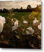 Hibiscus At Sunrise  Metal Print