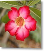 Hibiscus Flower Metal Print by Maeve O Connell
