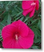 Hibiscus Flower Times Two Metal Print