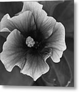 Hibiscus In Black And White Metal Print