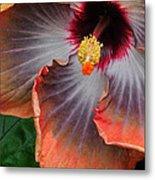 Hibiscus Key Largo Metal Print