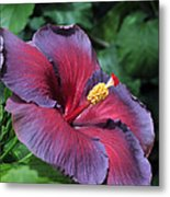 Hibiscus Night Fire Metal Print