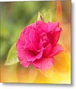 Hibiscus On Fire Metal Print