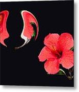 Hibiscus Seed Dream Digital Art Metal Print