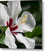 Hibiscus White Wings Metal Print