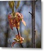 Hickory Bloom Metal Print