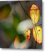 Hidden Forest Leaves Metal Print
