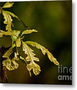 Hidden Leaves With A Green Back Ground Metal Print by Robert D  Brozek