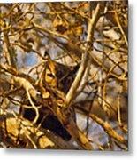 Hidden Owl Metal Print