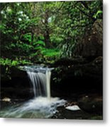 Hidden Rainforest Metal Print