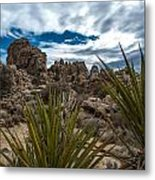Hidden Valley Yuccas Metal Print