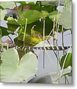 Hidding In The Lily's Metal Print