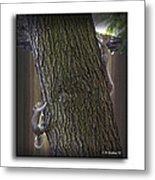 Hide And Seek Squirrels Metal Print