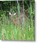 Hiding Deer Metal Print